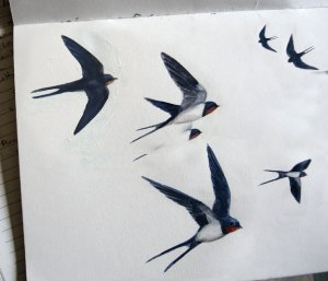 watercolour sketches of swallows by Eoin Mac Lochlainn